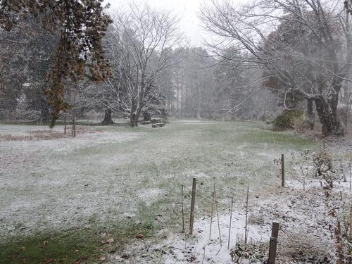 161107雪のぼたん園 015.JPG