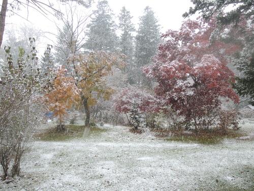 161107雪のぼたん園 017.JPG