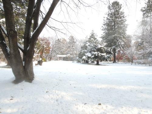 161107雪のぼたん園 031.JPG