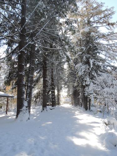 161107雪のぼたん園 040.JPG