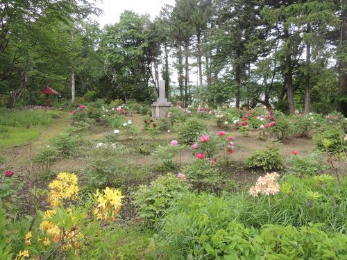 170610牡丹開花からぼたん祭り前日まで 072.JPG