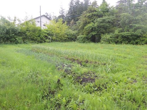 180705平成30年7月5日帰京前日、雨 016.JPG
