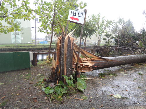 台風23号 016.JPG